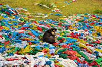 Dog on Tibetan prayer flags