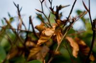 Autumnal Bokeh