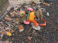 Dumped on the beach