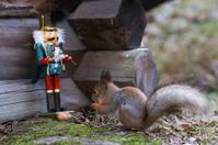 Nutcracker and Squirrel