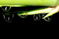 Nature bamboo waterdrop