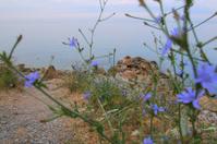 Blue dawn sea