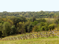 Iowa Lanscape - Field and Forest