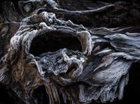 Frosty Driftwood