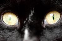 Macro Cat Eyes