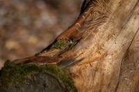 Tree pests - Woodworm Printer