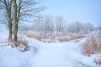 trees in frost by frozen river during winter
