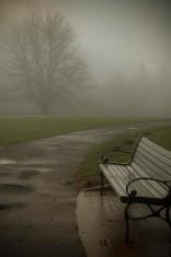 Foggy Park Bench