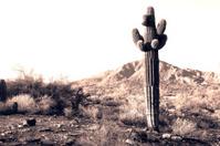 Cactus in the scrub desert