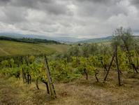 Chianti vineyard in the rain