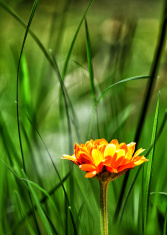 Gras Flower