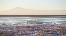 Flamingos at Sunset on Salar de Atacama, Chile