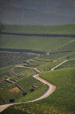 Vinhas do Douro , Vineyards Port wine
