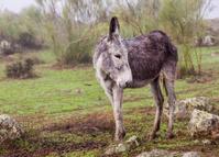 Donkey in a foggy day