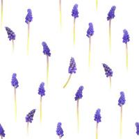 Seamless Grape Hyacinths