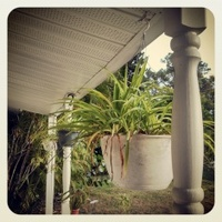 Hanging Plants on Florida Porch