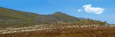 Fynbos on the mountainside