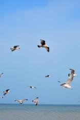 Flock of gulls on the beach