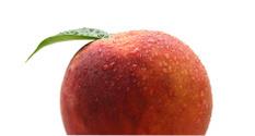 Moist Peach