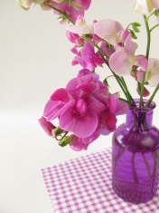 Bouquet of large purple vetch in a vase