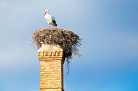 Nest with a stork on an abandoned factory chimney
