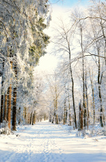 Hiking trail through winter forest with snow