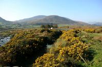 Ireland vistas