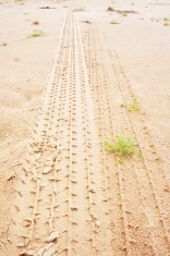 Tire tracks on the ground after a rain