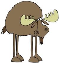 Long legged moose