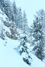 Winter mountain misty forest.