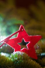 red christmas star fir tree
