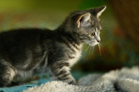 kitten on the prowl