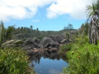 Seychelles scene