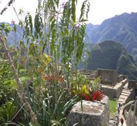 Garden, Machu Picchu, Peru