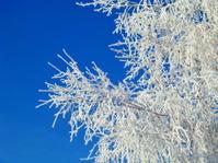 Branch in snow