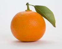 """Bitter orange """"Daidai"""""""