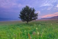 Foggy dawn on the spring field