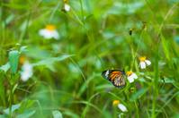 Butterfly feeding on a flower