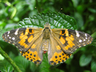 Beatutiful Butterfly in nature -different colors