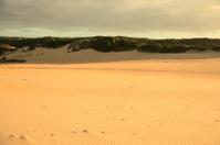 Park dunes