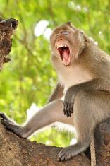 打猴子图解