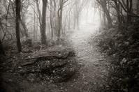 Misty Mountain Pass in Craggy Gardens