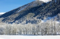 Snowy forrest in Winter