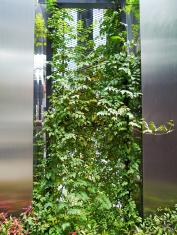Plant on  grating.