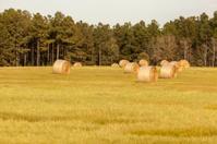 Round Hay Bales II