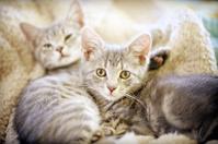 twin kittens