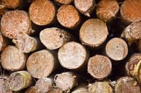 Firewood Stocks