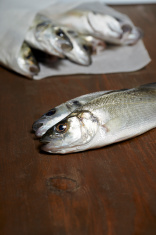 fresh fish, sea bass