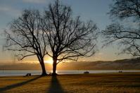 Tree in winter sunrise