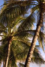 Random Palms